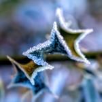 """15 - """"Frozen Edges"""" © 2014 by Patrick Fontaine  (Belgium)"""