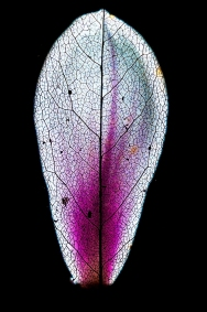"78 - ""Purple Maze"" © 2014 Patrick Fontaine (Belgium)"
