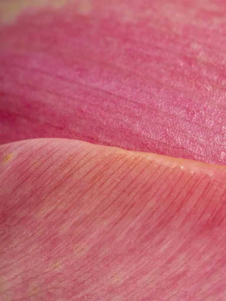 "77 - ""Pink"" © 2014 Stephen Berte (USA)"